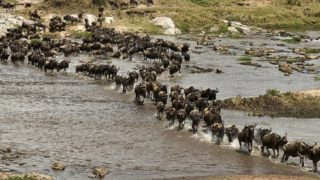 https://citizentv.s3.amazonaws.com/wp-content/uploads/2016/07/wildebeest-migration-320x180.jpg